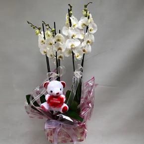 papatya demeti 5 Dal Vip Orkide
