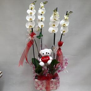21 kırmızı gül 4 Lü Orkide ve Ayıcık