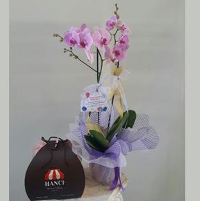 karma renk gerberalar Orkide ve Pasta