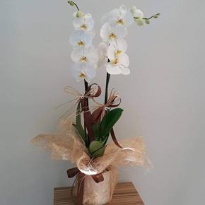 заказать доставку букета цветов в алании на нашем сайте Белая орхидея