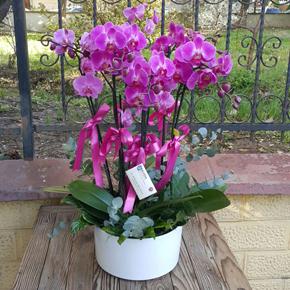 11 kırmızı güller 6 Dal Orkide Vip
