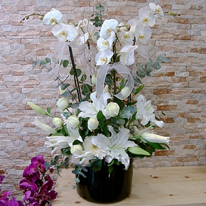 purple and white chrysanthemums White Vip Orchid Arrangement
