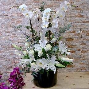 alanya çiçekçilik Beyaz Vip Orkide Aranjmanı