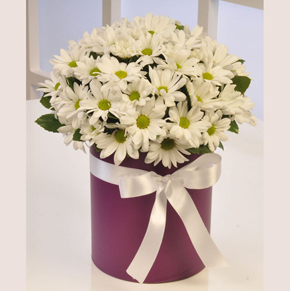 71 roses bouquet in Box Chrysanthemum
