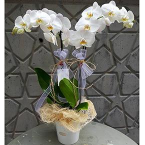 narurel ambalajlı orkide Abaka Ambalajlı