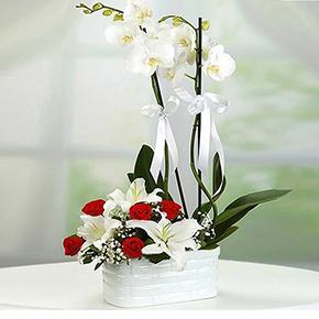 kutuda 101 gül Orkide Gül Lilyum