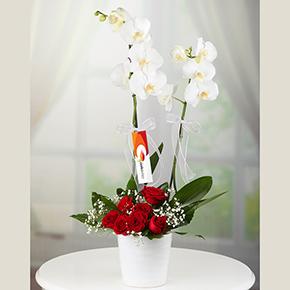 Şeffaf kalp 11 kırmızı gül Orkide ve 7 Gül