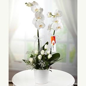 lisyantus papatya Орхидеи с белыми розами