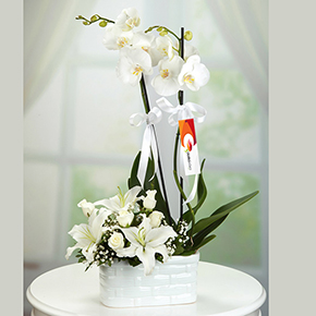 White Roses, Orchid with lilies