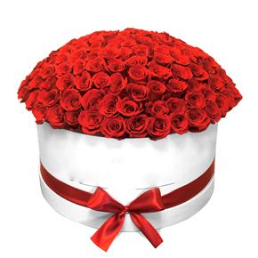 in box chrysanthemum 101 Roses in Box